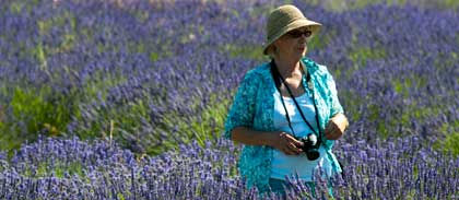 Sequim Lavender Tour