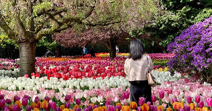 roozen gaarde - Tulip Garden Near Me