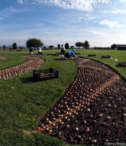 Roozengaarde Planting Season