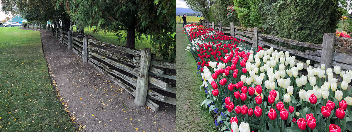 Before and After Tulip Planting
