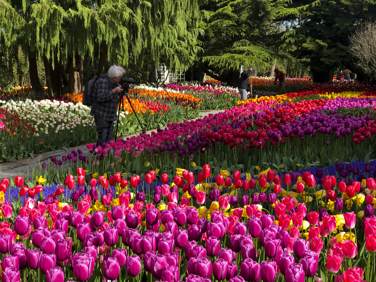 Seattle Tulip Festival Tours