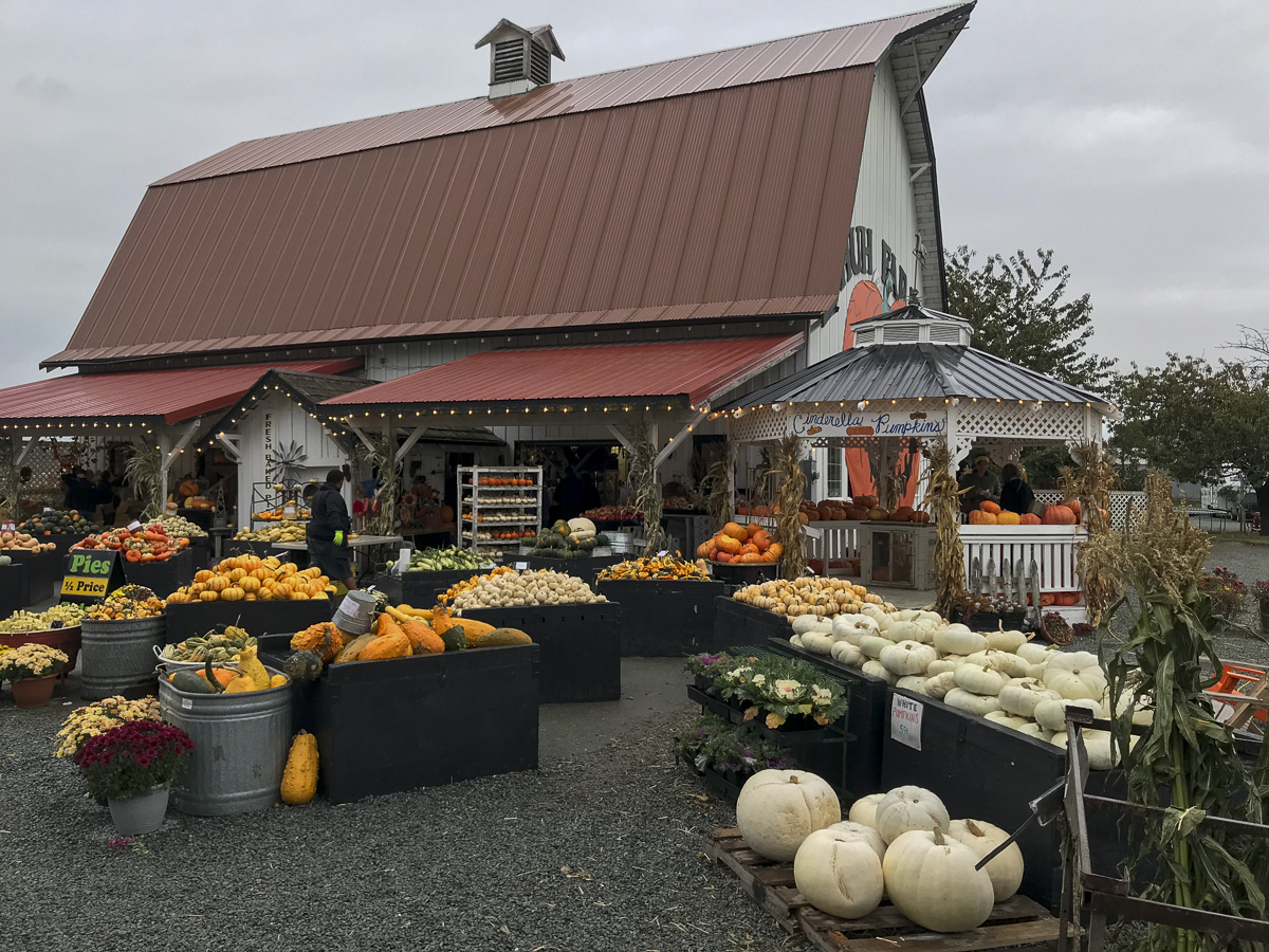 Shuh Farms in October