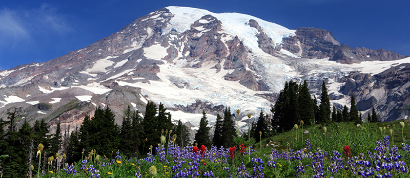 Mt. Rainier Tours by Shutter Tours