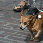 Strut Your Mutt at Pike Place Market - By Terry Divyak at Shutter Tours